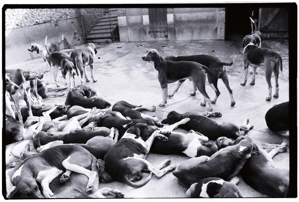 La meute de chiens de chasse du château