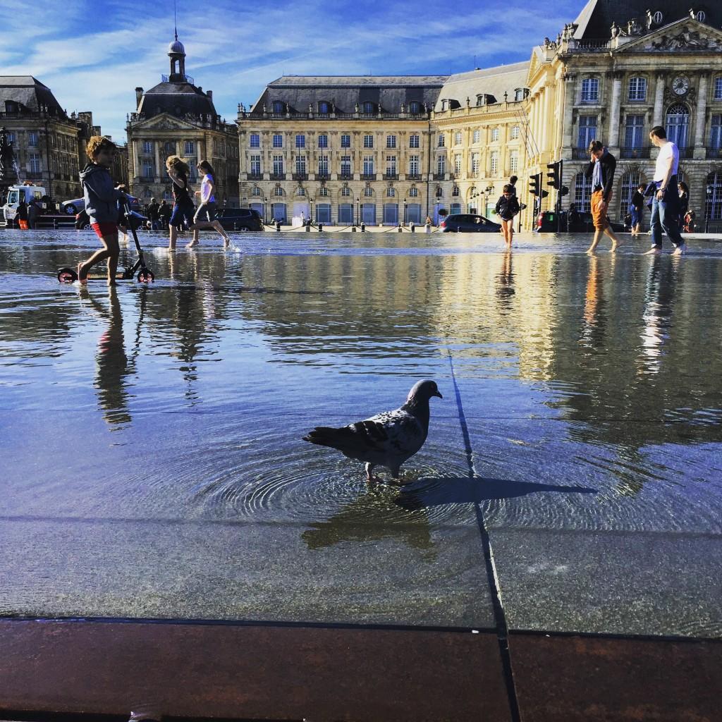 Un pigeon prend un bain de pied sur les bords de la Garonne