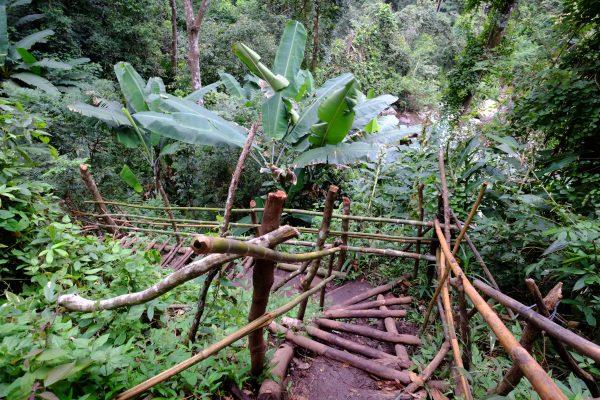 Un petit chemin à Doi Inthanon en Thaïlande