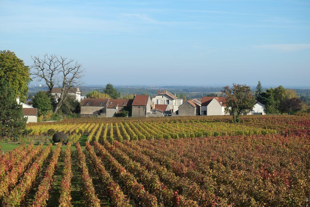 Les vignes du côté du village de Morey