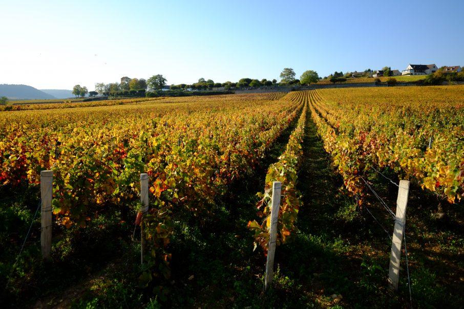 Meursault et les vignes en automne