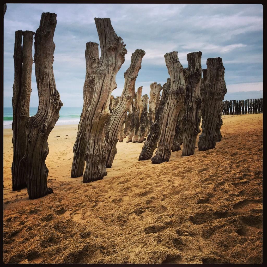 Étranges troncs de bois premiers remparts face à l'océan
