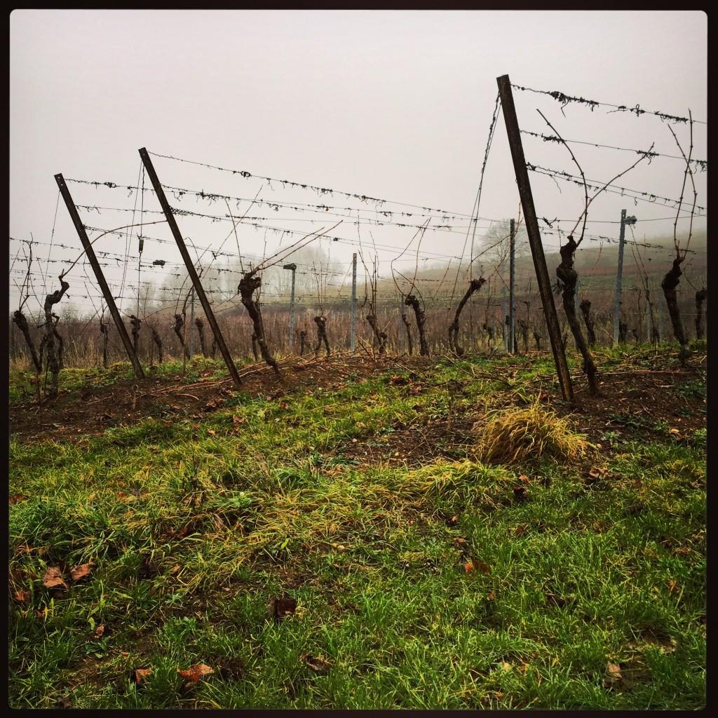 Au pied des vignes en Alsace