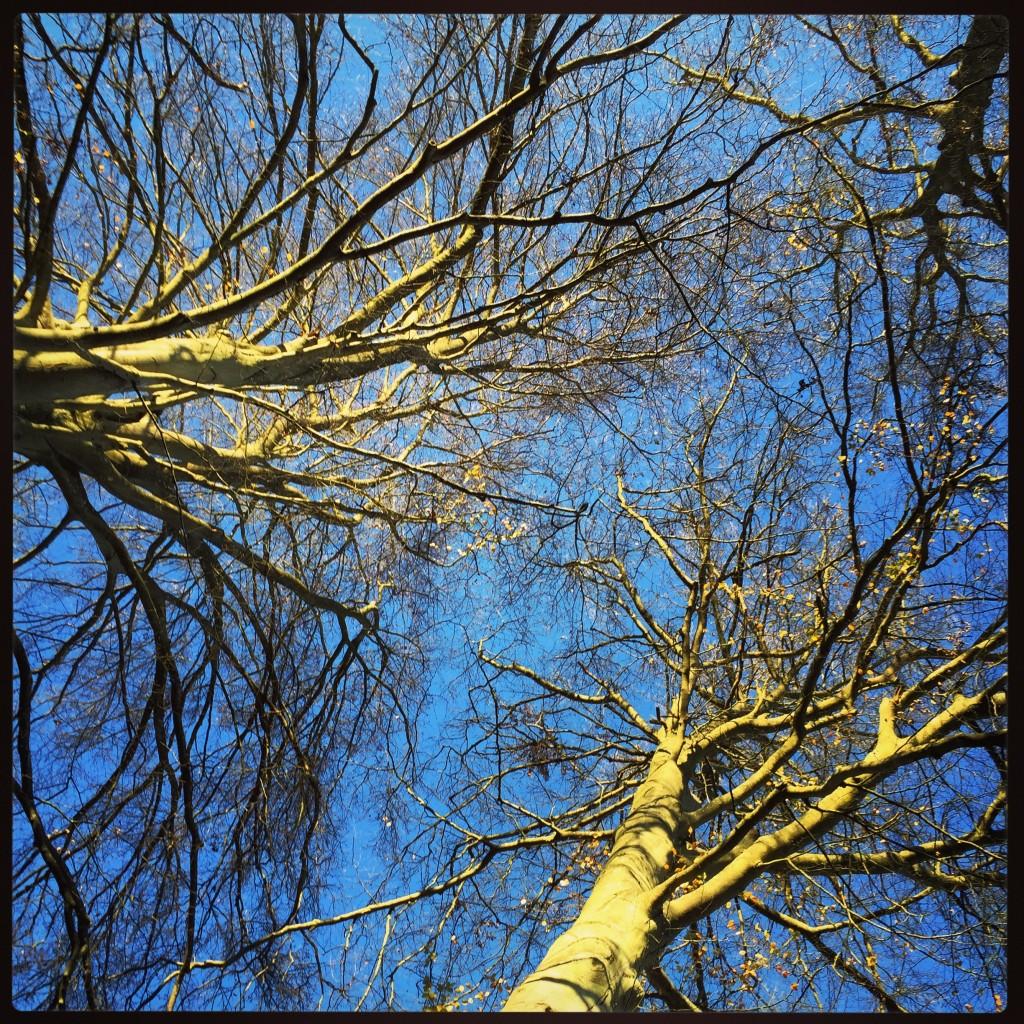 Balade en forêt picarde