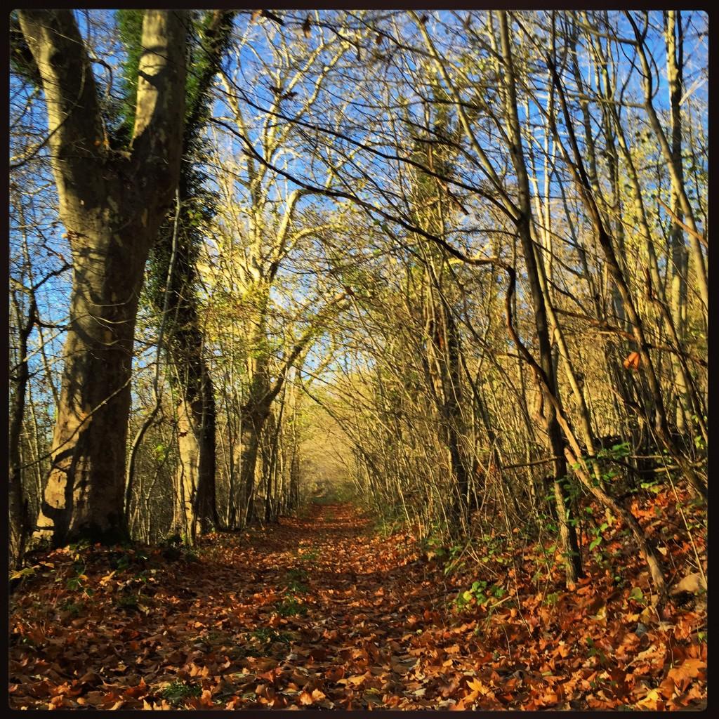 La forêt en Picardie en hiver