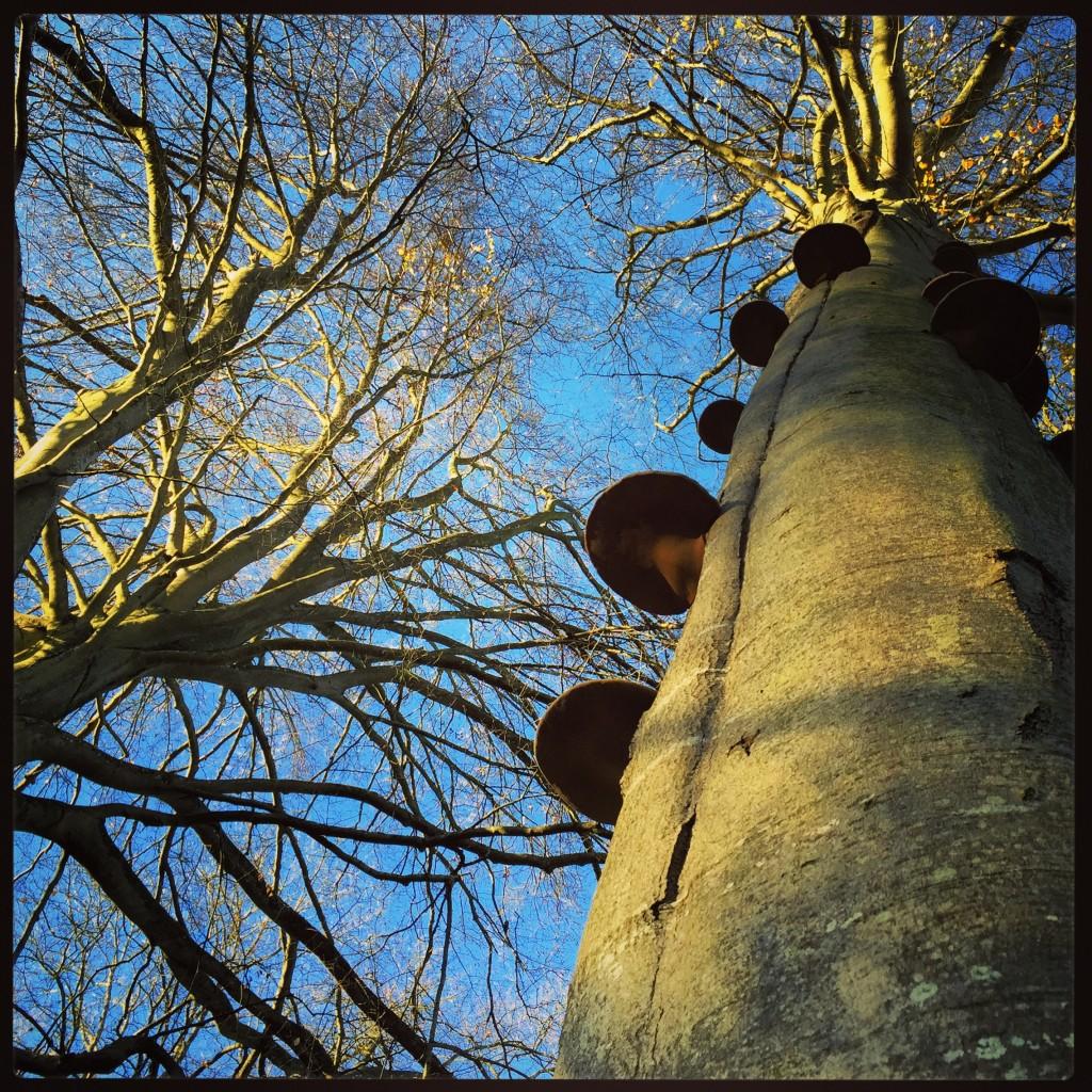 Les vieux arbres ne montent jamais jusqu'au ciel