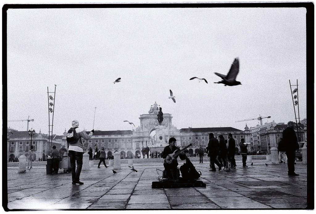 Balai incessant de mouettes et de pigeons au bord de l'eau