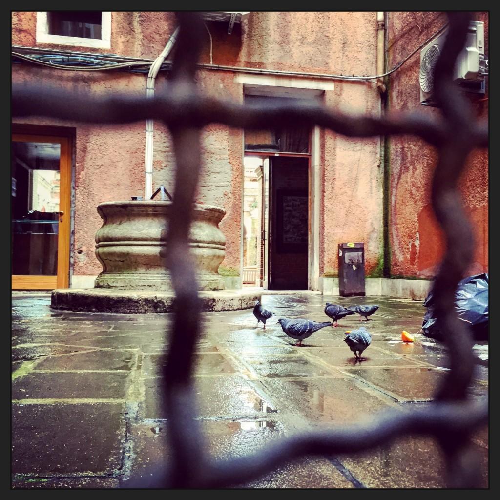 Des pigeons s'attaquent à une poubelle à l'intérieur d'une cour