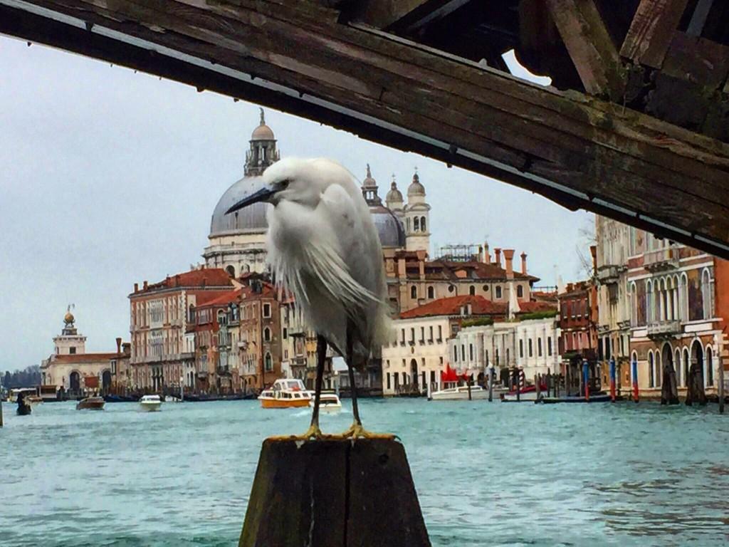 Venise en hiver c'est le pied!