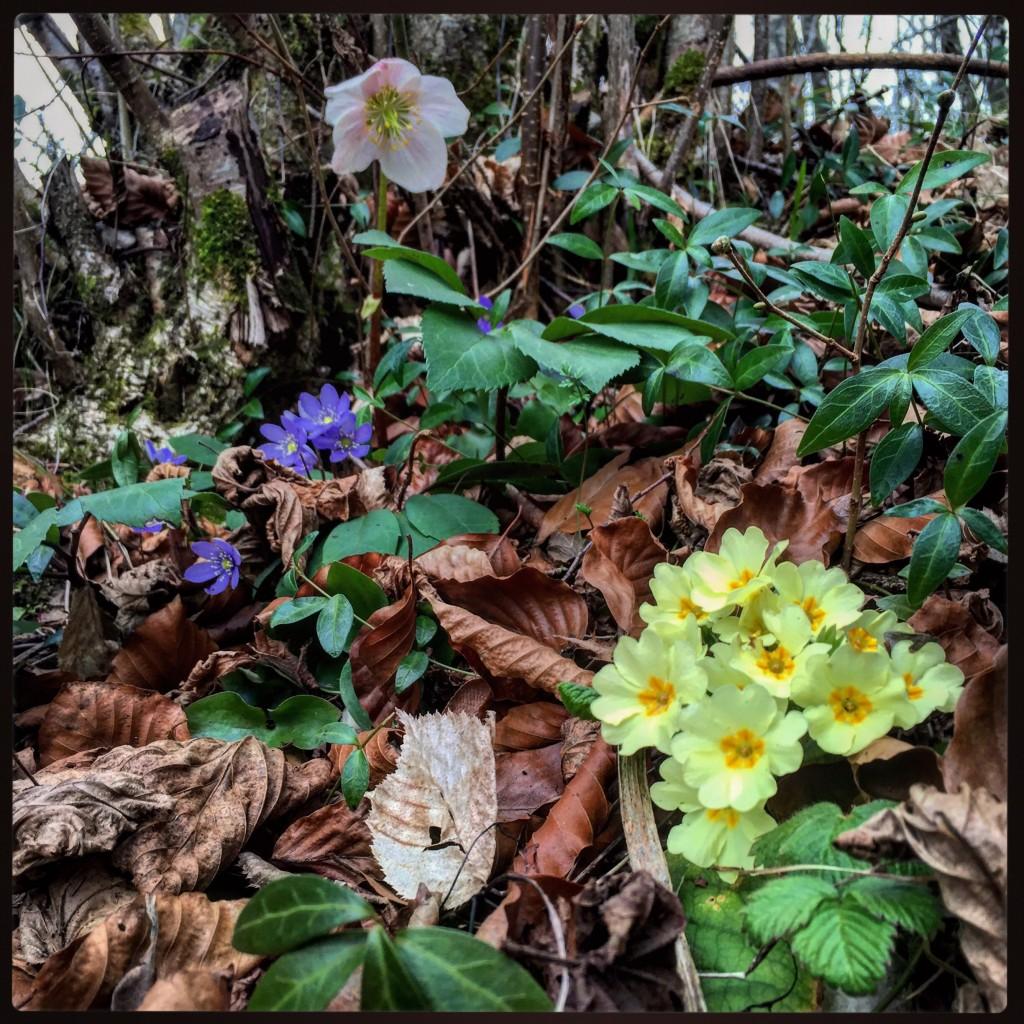 Le printemps est en marche