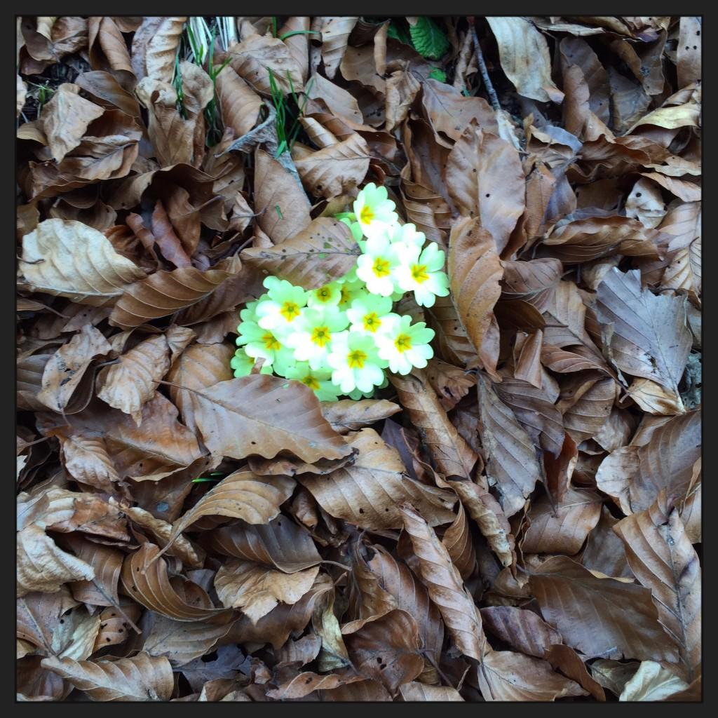 Quelques fleurs égarées dans quelques feuilles d'automne. Un subtil mélange de saisons.