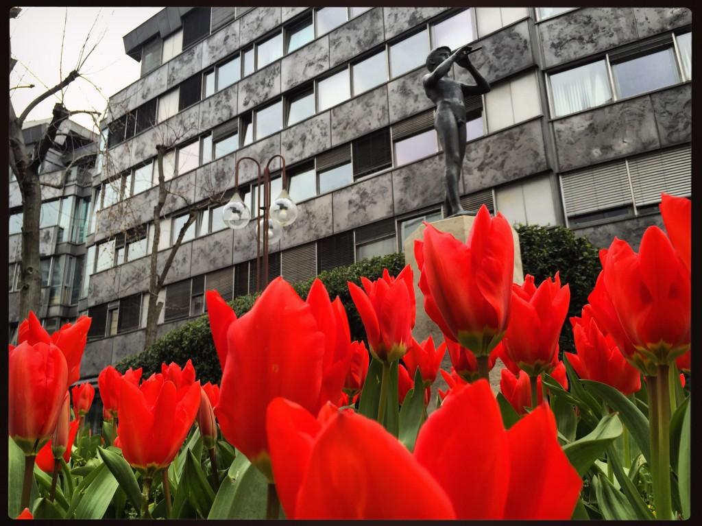 Quelques Tulipes à Ljubljana, la capitale Slovène.