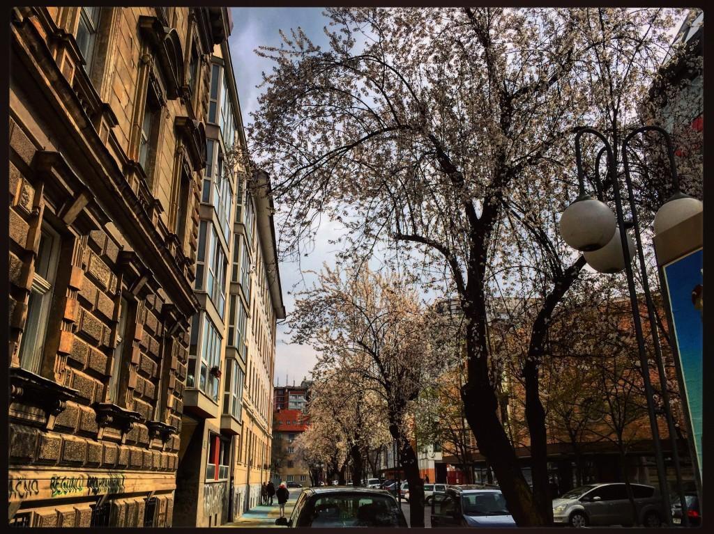 13. Le printemps revient en Slovénie