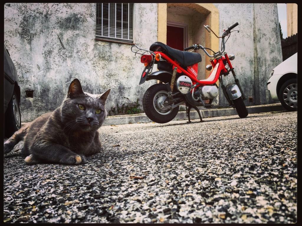 Un joli chat gris écrasé par la chaleur