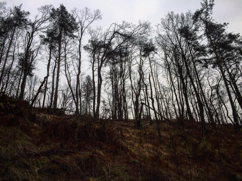 28. Le bois qui borde le parc de Tivoli à l'air d'avoir souffert pendant l'hiver.