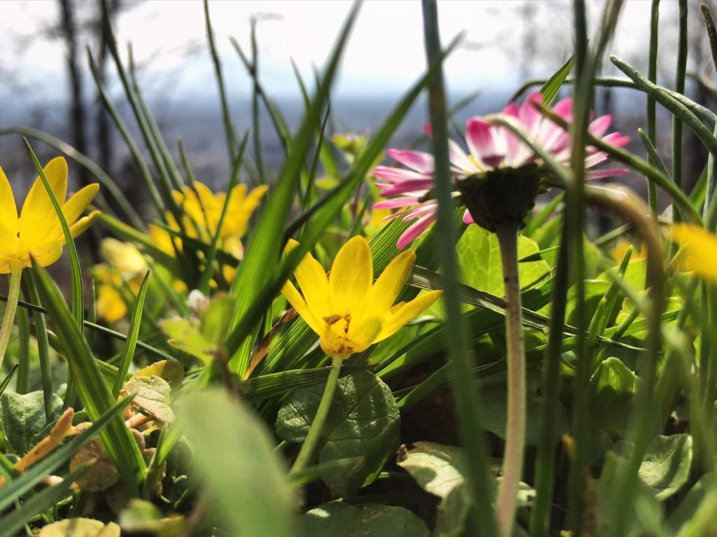 50. Quelques fleurs au pied du château