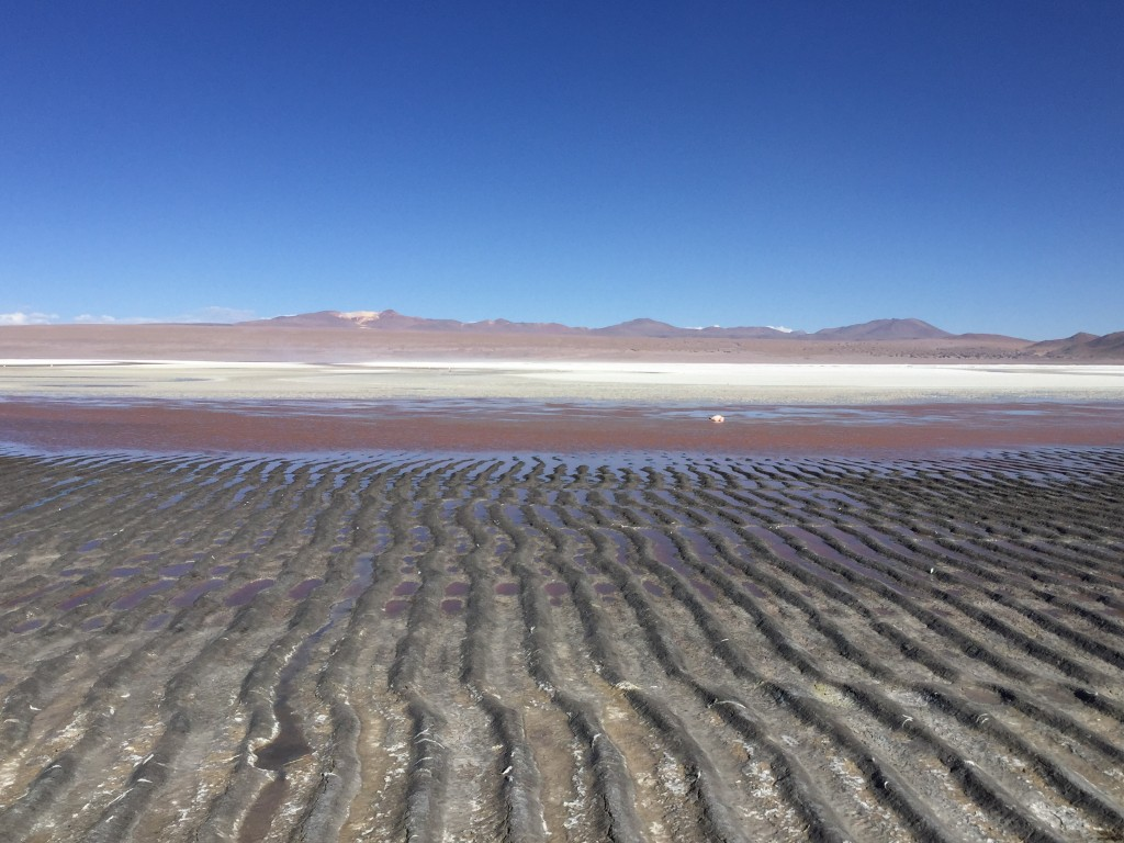 La laguna Colorada, Bolivie.