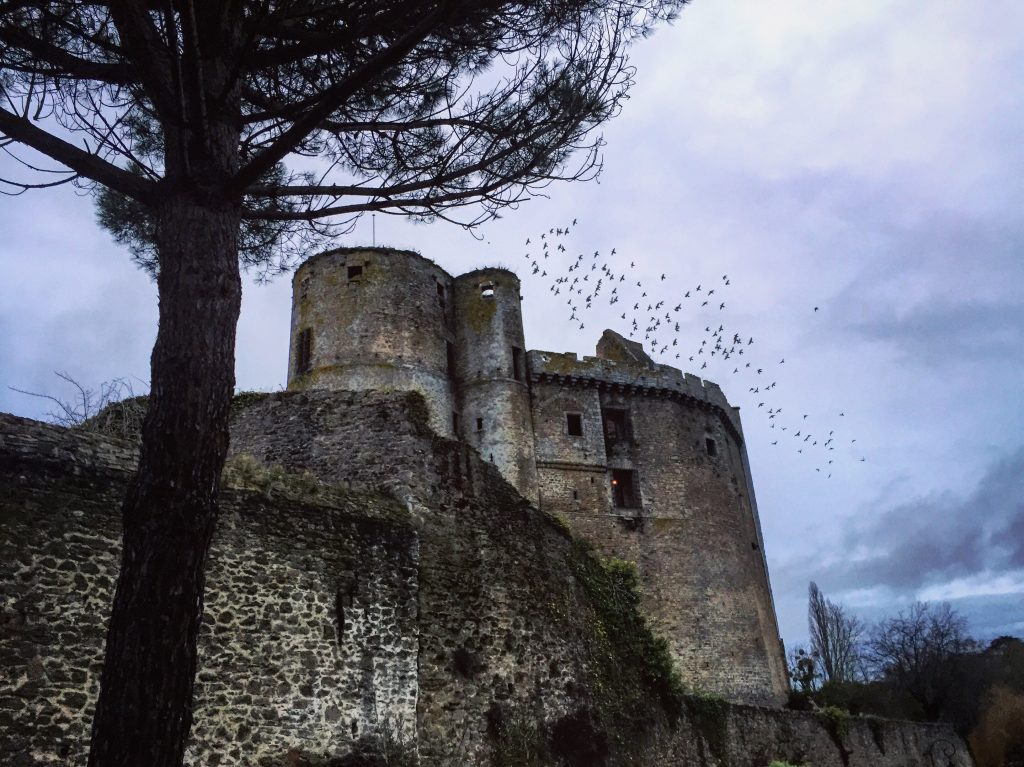 Des pigeons s'apprêtent à passer la nuit sur la tour du château fort de Clisson