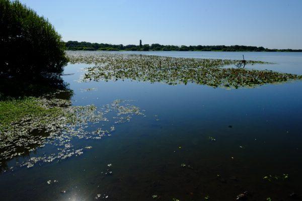 Sur les bords du lac de Grand Lieu
