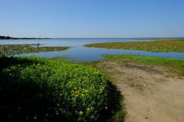 Le lac de Grand Lieu à Saint-Aignan