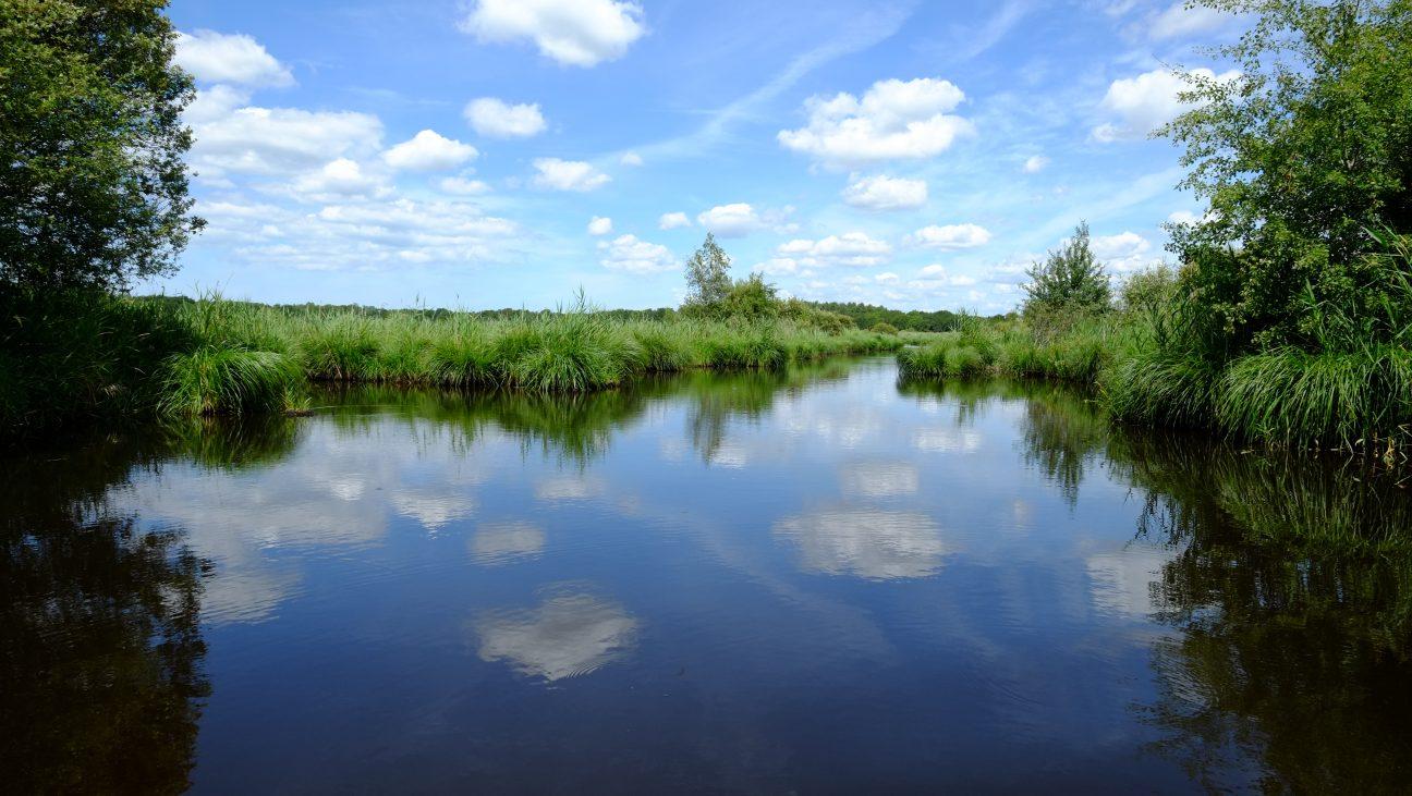Le parc naturel de Brière l'une des choses à voir à côté de Guérande