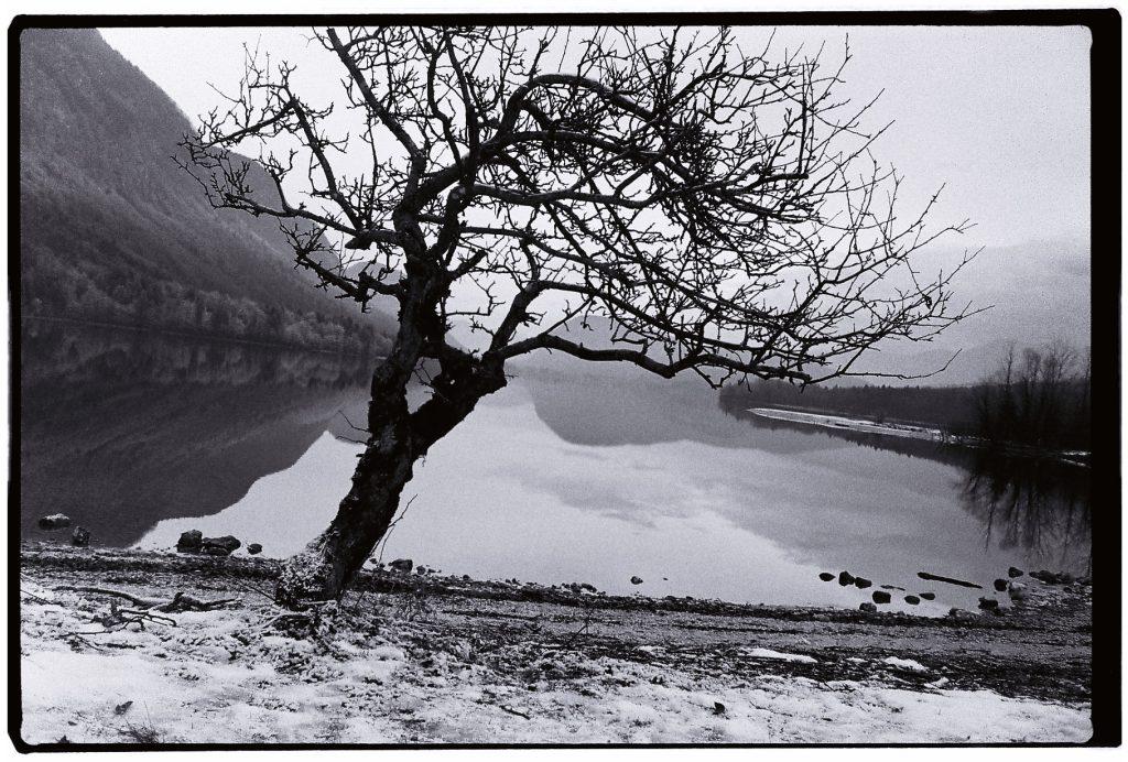 Un arbre au bord d'un lac en hiver