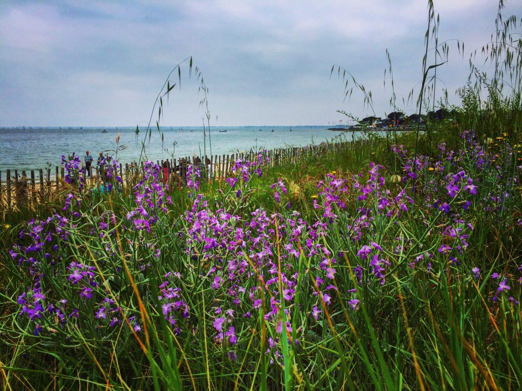 Une barrière végétale trace la limite entre la plage et la ville de Carnac