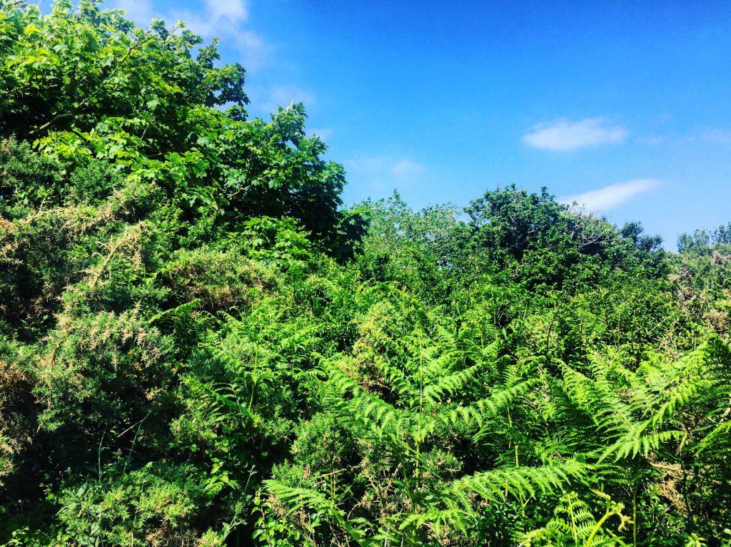 Quelques arbres formant une jungle à Carnac en plein été