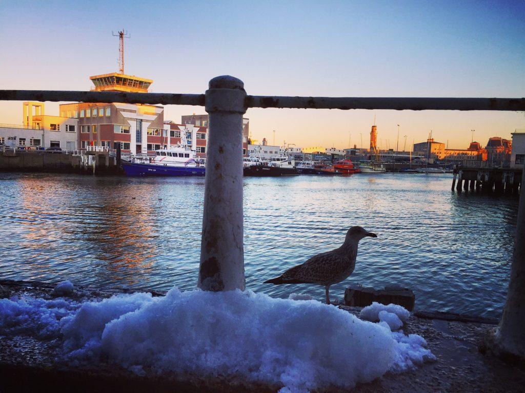 Un peu de glace en été sur le port d'Ostende