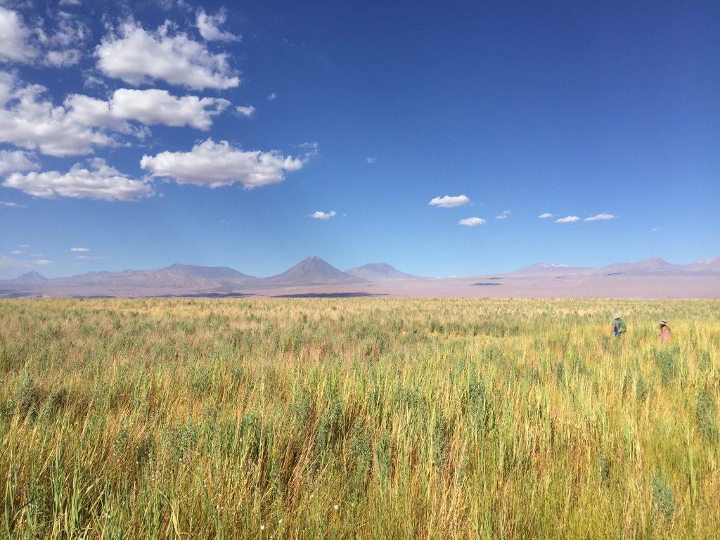 Le plateau andin au Chili