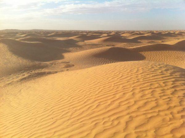 Le désert du Sahara une rencontre imprévue