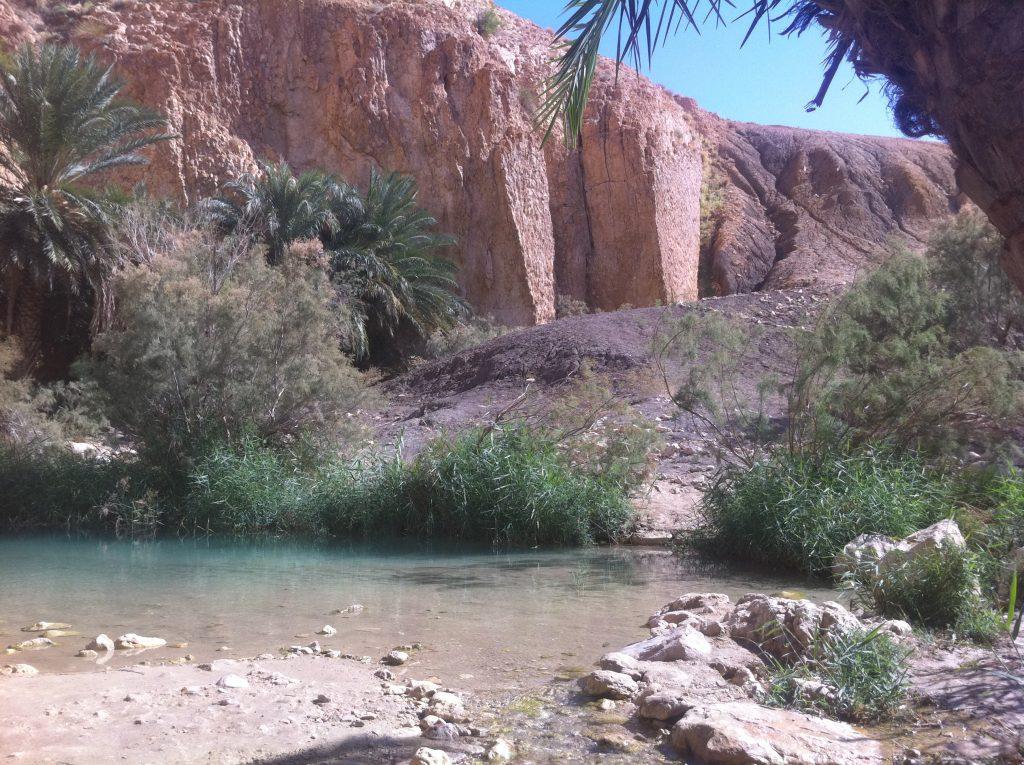 Un Oasis dans le désert tunisien