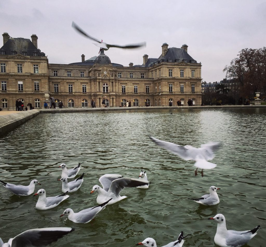 Les mouettes du jardin du Luxembourg