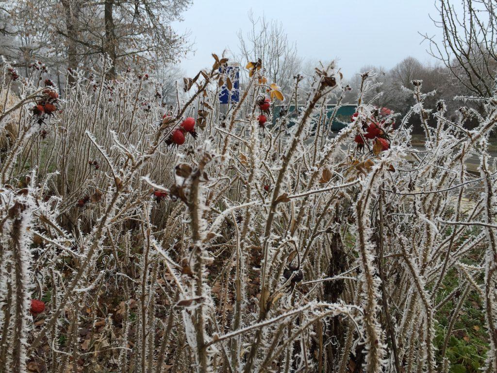 Le givre s'empare de la végétation lors d'un épisode de froid en France