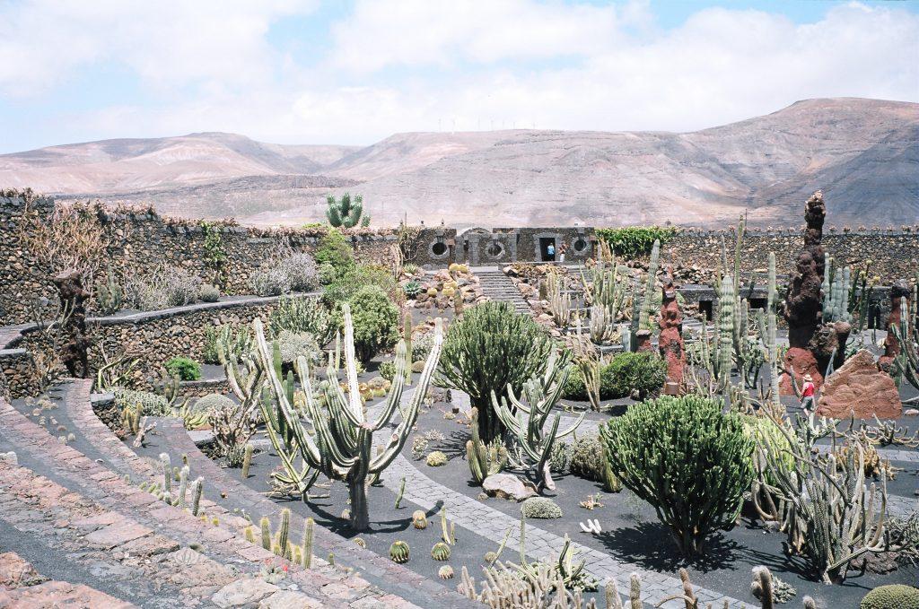Le jardin des Cactus à Lanzarote, par César Manrique
