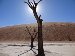 La photo des arbres morts, Dead Vlei, Désert du Namib