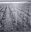 L'ennivrante route des grands crus de Bourgogne