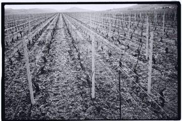 Les vignes de Bourgogne, un panorama et un parcours à travers l'histoire