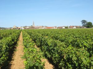 Les vignes de la Côte de Beaune sous le soleil, route des grands crus