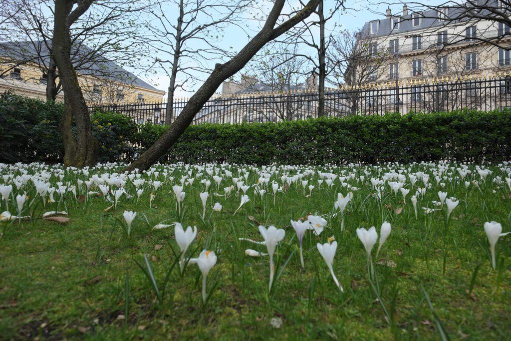 Dans le jardin du Luxembourg au printemps à Paris