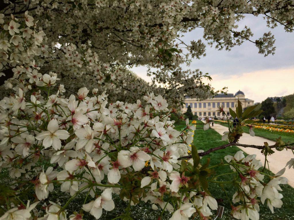 Le jardin des plantes, Paris V ème
