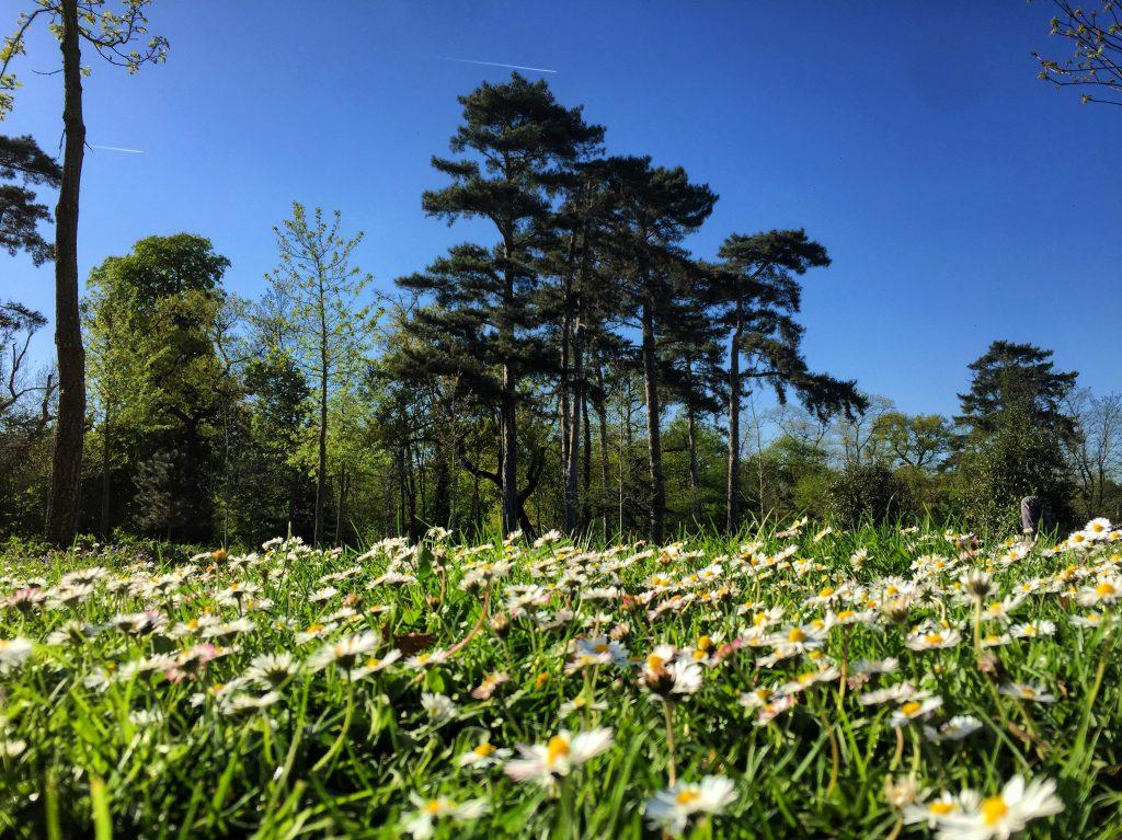 Le bois de Boulogne au printemps
