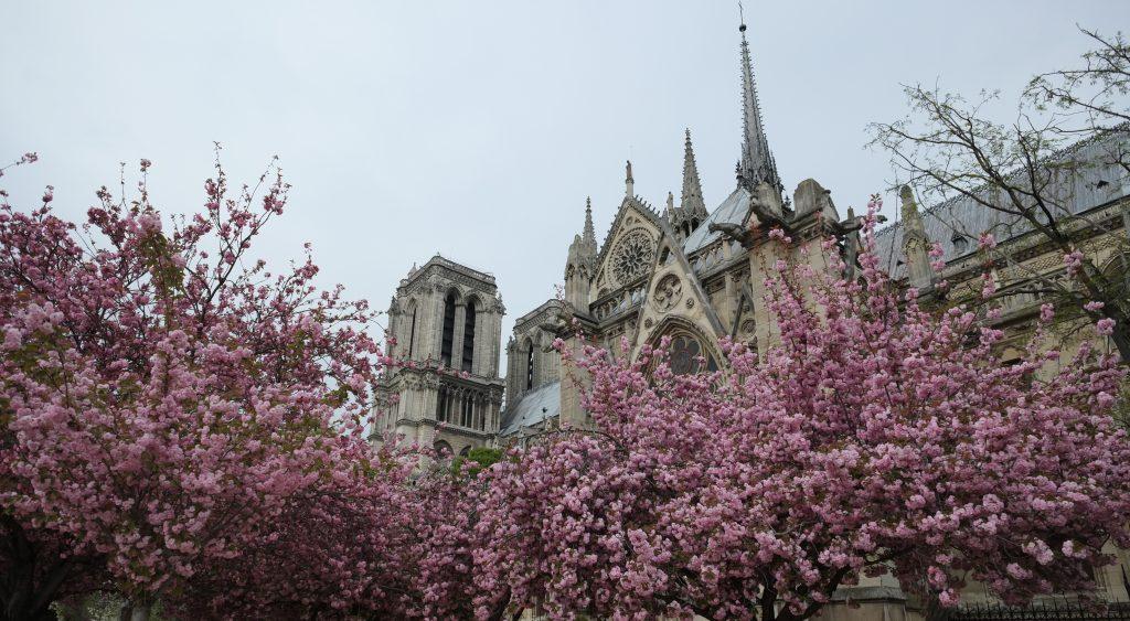 Notre Dame envahie par les fleurs au printemps