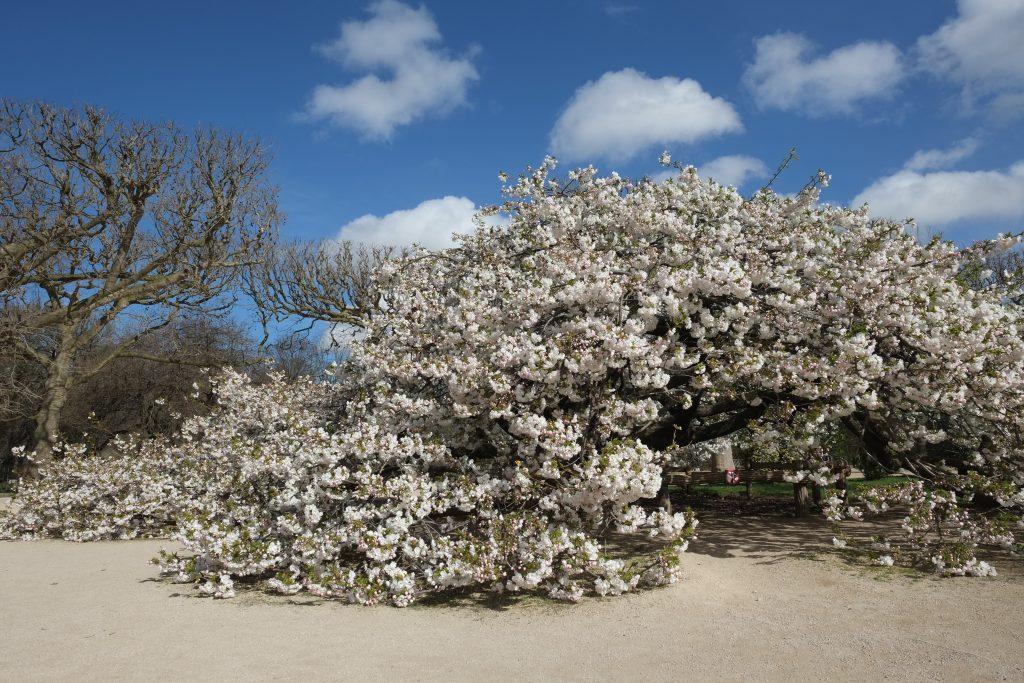 Une cabane en fleur au jardin des plantes