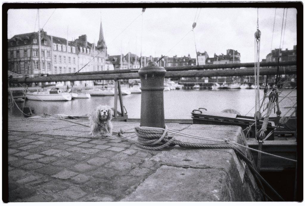 Un petit chien attendant son maître sur le port d'Honfleur