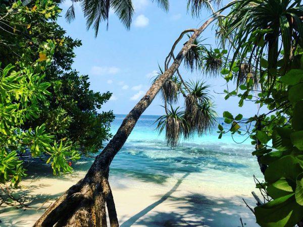 Entre la plage, l'océan et la végétation tropicale sur l'archipel des Maldives