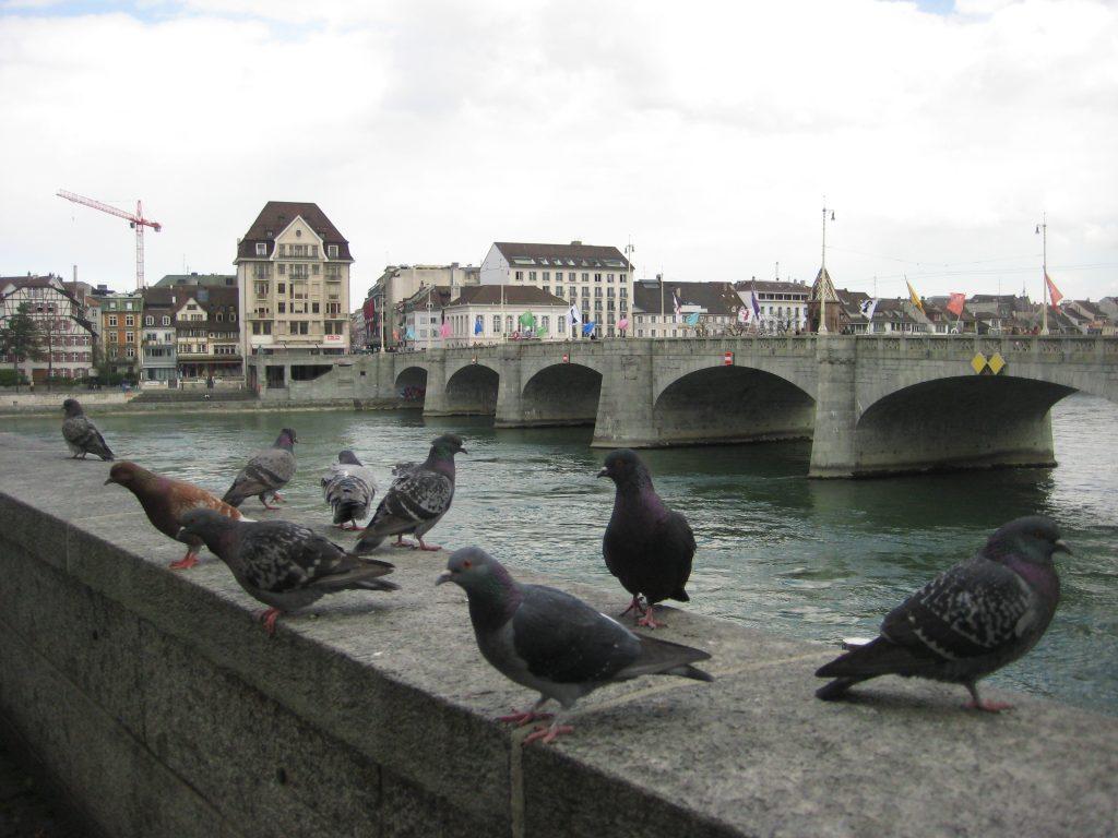 Le Rhin, l'un des plus longs fleuves d'Europe