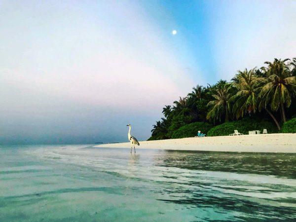 L'un des plus beaux endroits du monde sur l'île de Fihalhohi aux Maldives