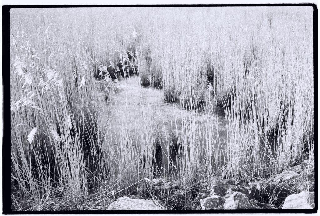 Une zone de marais aux abords de l'estuaire de la Seine et de la Manche