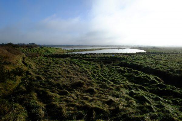 Balade dans les herbes hautes du parc du Cotentin et du Bessin